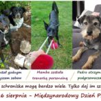Międzynarodowy Dzień Psa